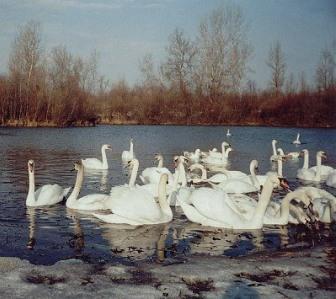 Фото Тетяни Спориніної. Чортория . 2006 р.