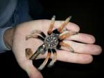скелет_павука