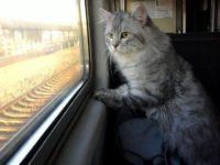 """У Японії їздитиме """"котячий"""" потяг"""