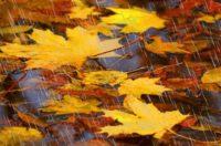 Синоптики повідомили прогноз погоди на листопад
