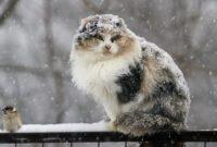 На Василя очікують морози, а на Водохреща – сильні снігопади