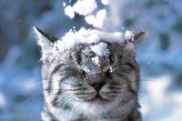У п'ятницю Буковину замете мокрим снігом