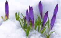 Справжня весна прийде аж перед Пасхою