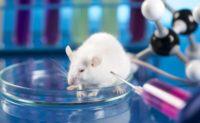 Вченим удалося «розчинити» ракові пухлини у мишей