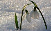 До кінця тижня в Україну повернуться сніг і холод