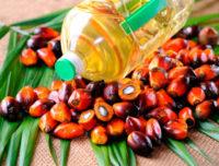 Заборона пальмової олії в Україні потягне за собою здорожчання хліба, масла, цукерок і сиру