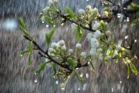 Цього тижня очікується похолодання і дощі