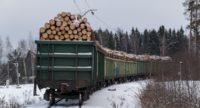 Заокруглили: Україна занизила відомості щодо експорту лісу-кругляку… в 240 разів