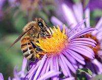 В Україні масово гинуть бджоли