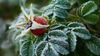 Бабине літо скінчилося: насуваються заморозки