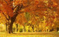 Перші дні листопада будуть теплими і сонячними