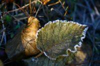 Синоптики прогнозують нічні заморозки наступного тижня