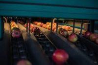 Єдиний в Україні хаб з відбору яблук відкрито у Недобоївцях