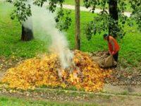 У Чернівцях створили пункти прийому сухого листя