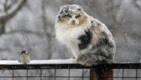 Завтра й післязавтра на Буковині далі сніжитиме