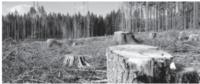 700 тис грн збитків через незаконну вирубку дерев