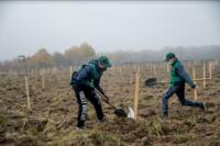 Лісівники Буковини відновили майже 1,5 тис.  гектарів лісу