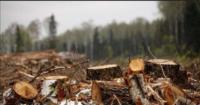 Бла-бла- бла-бла!   Повернення до перевірок – це посилення екологічного контролю?