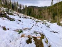 На Буковині виявили незаконні вирубки дерев на 3,6 млн грн
