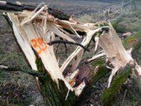 Знищили дерева і захопили площу – збитків на півмільйона