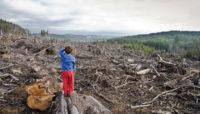 За незаконну рубку дерев суд зобов'язав «Чернівецький лісгосп» відшкодувати понад 3 млн грн збитків