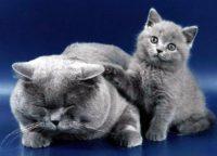 До міжнародного дня котів: хто з пухнастиків найдорожчий?