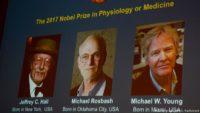 """""""Нобеля"""" з медицини цьогоріч отримали за дослідження біоритмів"""