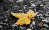 Від ночі у Чернівцях сильні дощі і зниження температури