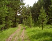 Прокуратура Чернівецької області зупинила розбазарювання земель лісфонду