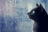 У Польщі ввели податок на дощ
