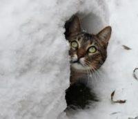 Весна затримується: до 3 березня на Буковині сніг і мороз