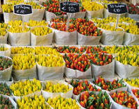 Порахували, скільки квітів завозять в Україну