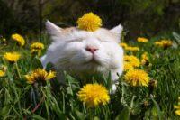 Гуляємо! Цьогоріч у травні в українців буде аж 11 вихідних днів