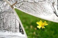 На Буковину повертається зима