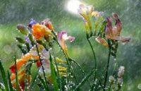 Завтра синоптики обіцяють грозові дощі