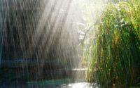 Пів України потерпає від спеки і посухи, а інші пів України – від дощів