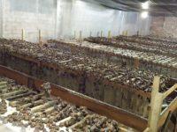 На Буковині поблизу Мамаївців відкрили першу ферму равликів