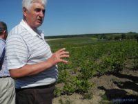 Власник горіхового саду з Глибоччини Сафрон Фарфуляк створив уникальне господарство зі щеплення волоських горіхів