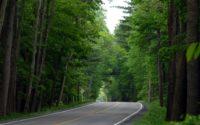 Лісові дороги навіть кращі за шляхи загального користування