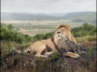 За останні 40 років популяція дикої природи у світі скоротилася на 60%