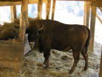 У мисливгоспі «Зубровиця» – вдосталь кормів для зимівлі диких тварин