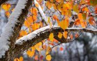 У середу й четвер очікуємо сильний вітер, мокрий сніг і навіть мороз!