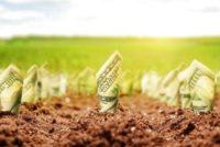 Виклик для України: Ринок сільськогосподарських земель в Україні існує