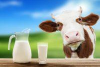 Виробляти молоко в Україні стає все більш невигідним