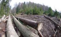 21 березня – Всесвітній день лісів: Реквієм лісам, що колись укривали Буковину
