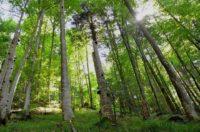 «Компанії з ЄС – співучасники корупції й незаконних вирубок лісів в Україні» – британські розслідувачі