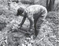 Державною екологічною інспекцією Карпатського округу на території НПП Вижницький виявлено незаконну порубку дерев на 234 тис.грн.