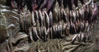 Екоінспекція вилучила більше незаконно добутої риби майже на 50 тис. грн