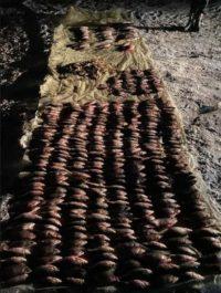 Екоінспекція вилучила понад пів тисячі незаконно добутих рибин і раків