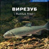 За червонокнижну рибу – 17 тисяч гривень